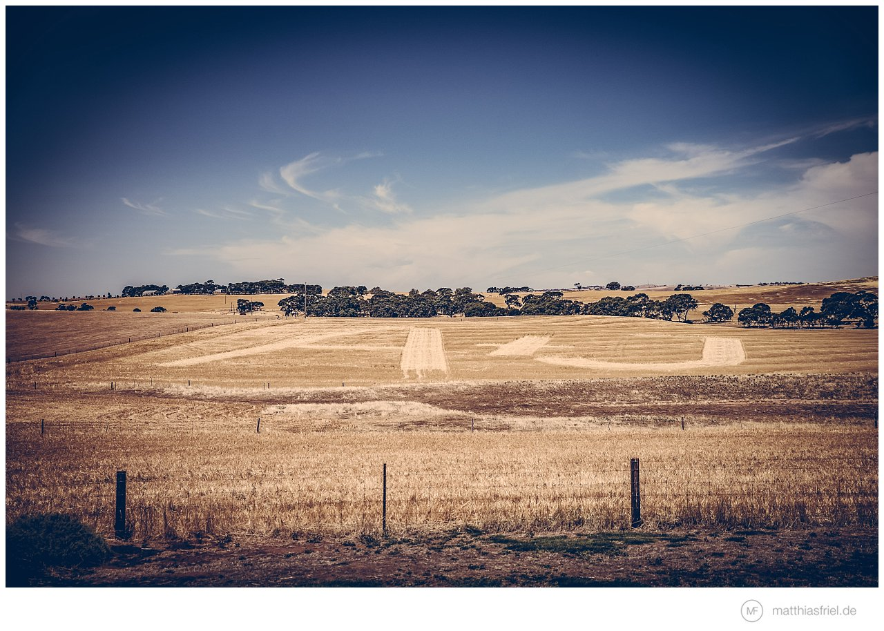 wedding-barossa-valley-Murray Street-Vineyards-australia-matthias-friel_0018