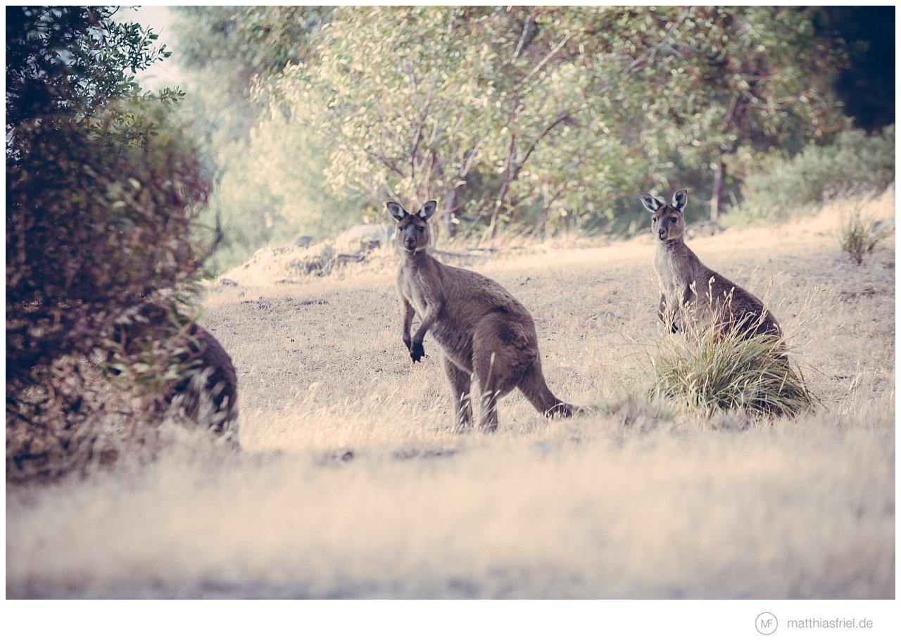 australia-matthias-friel_0030
