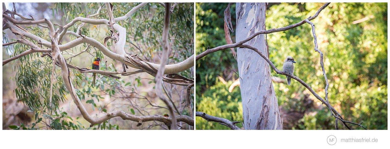 australia-matthias-friel_0051
