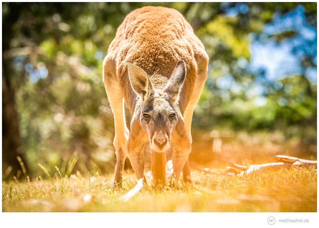australia-matthias-friel_0064